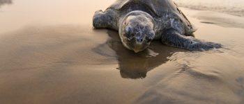 تصویر ، استراحت لاکپشت در ساحل در تصویر روز نشنال جئوگرافیک